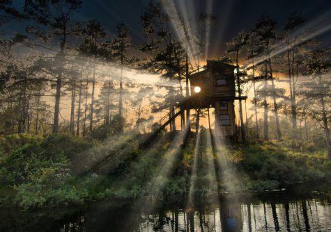 tretopphytte i skogen